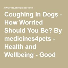 Coughing in Dogs - How Worried Should You Be? By medicines4pets - Health and Wellbeing - Good Vet & Pet Guide - Find a Vet | Pet Service | Reviews | Advice