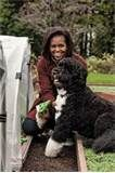 """Image detail for -In her book, """"American Grown: The Story of the White House Kitchen Garden and Gardens Across America,"""" Michelle Obama reveals that Bo has a very important job — as ..."""