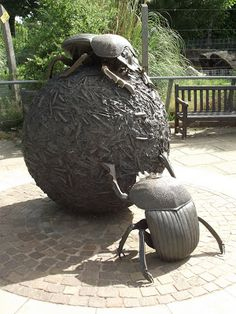 Dung Beetles in a Royal Park -Wendy Taylor
