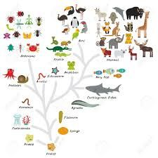 Evolution in biology, scheme evolution of animals isolated on white background. Evolution scale from unicellular organism to mammals. Evolution, Science Biology, Science Art, Kawaii, Math Fractions, Education Quotes For Teachers, Iphone Skins, Iphone 8, Teacher Humor