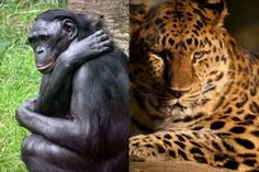 animals of the world - Google Search
