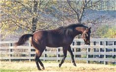 Old Friends Dream Farm for retired thoroughbred race horses...  click to see who is there;  http://www.oldfriendsequine.org/thoroughbred-rescue-list.html