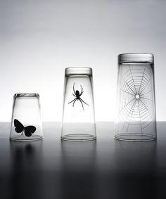 PROPAGANDA / GLASS-SPIDER WEB SET(3PCS/SET)
