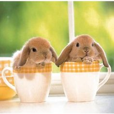 Teacup bunnies make everything better.
