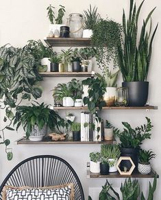 Amazing Wall Plants Decor For Cozy Living Room