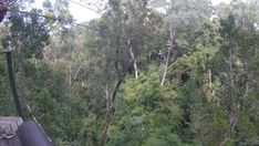 Tsitsikamma Canopy Tour - Linda Armstrong Unzipping Adventure Forest Floor, Canopy, Photo Galleries, Tours, Adventure, Gallery, Outdoor, Outdoors, Canopies