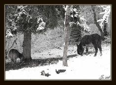 C'est pas un temps à mettre un âne dehors !!!! - Not wheather to stay   outdoors! - No hace tiempo para estar fuera!     Courtesie: Joëlle,   Glay, Doubs/Franche Comté, (France).© Copyrights Joélisa.