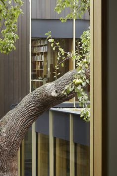 Pear Tree House contemporary home by award winning architects Edgley Design in South East London. Awarded Stephen Lawrence Prize and RIBA London Award 2015.
