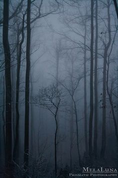 Mystic Forest by MelaLuna, via Flickr