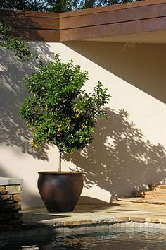 Growing Citrus in Planters  With a sunny location and a large pot, you can grow lemons, oranges and more
