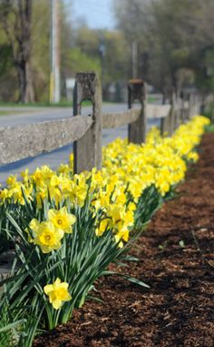 Choosing the right bulbs and planting them