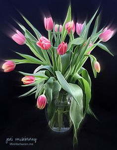 vase of pink tulips - still life - flowers - photography