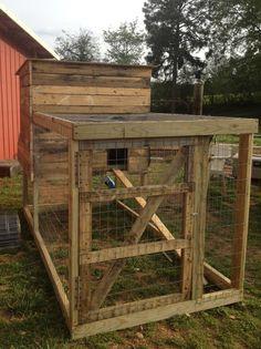 Southern Sunflower Seeds: Backyard Chicken Coop
