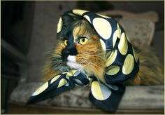 Fashion Kitteh goes for the retro scarf look.