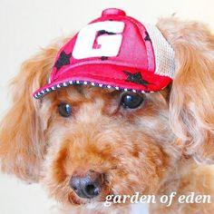 #2016ss #新作 です  メッシュCAP   立体感のあるフロッキーで仕上げられた星柄と ポップな配色が目を引くCAPです    #gardenofeden  #ガーデンオブエデン  #japanmade #犬の帽子 #犬帽子 #hat  #帽子 #キャップ #cap #fashion  #dogstyle #doghat #doggoods #犬 #いぬ #イヌ #わんこ #ワンコ #トイプードル #被り物 #toypoodle #dogs #dog  #dogstagram #dogsofinstagram  #dogs_of_instagram by gardenofeden_official #lacyandpaws