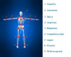 askiseis_anatomy