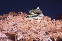 【大阪絶景桜】豪華絢爛な天守閣を薄紅色が華やかに彩る大阪城公園 | ORICON NEWS