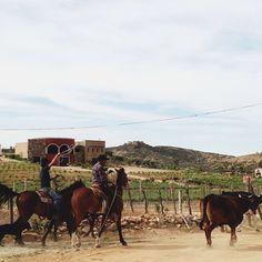 Valle de Guadalupe, Baja California