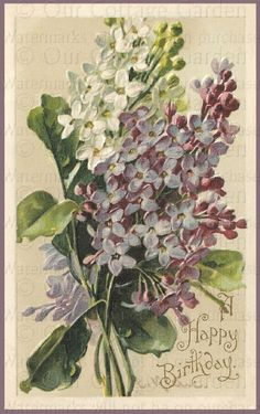 Google Image Result for http://www.ourcottagegarden.com/uploads/klein_lilacsWM.jpg