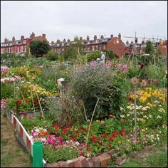 I think allotments are romantic.