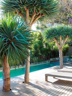 tropical garden Small, narrow lap pool along the back fence - can function as a small pool and the water feature. Langer Pool, Backyard Pool Designs, Backyard Ideas, Patio Ideas, Small Pools, Exterior, Garden Trees, Garden Plants, Pool Plants