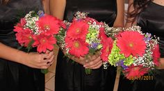 Bridesmaids Bouquets - Hot pink Gerbera Daisies and lime green.  Great combination.