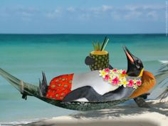 Even the penguins know where to go to get warm and relax...the Caribbean! www.caribbeandreamstravel.com 1-855-NOW-GETAWAY
