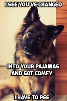 Wicked Training Your German Shepherd Dog Ideas. Mind Blowing Training Your German Shepherd Dog Ideas. Funny Dog Memes, Funny Animal Memes, Cute Funny Animals, Funny Animal Pictures, Dog Pictures, Funny Dogs, Dog Humor, Hilarious Sayings, Funny Fails