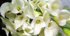 Fresh white calla