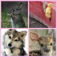 Kjoet dieren collage