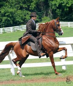 Arabian horse named A Noble Cause