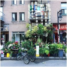 Urban jungle 🌸🌿 #dragonflowers #cages #shop #mileend #mtlmoments