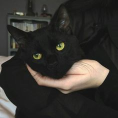 black cat with beautiful green eyes Crazy Cat Lady, Crazy Cats, I Love Cats, Cute Cats, Cute Black Cats, Adorable Kittens, Black Kitty, Black Cat Eyes, Charcoal Bengal