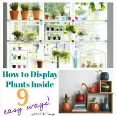 Hanging window plant shelves other urban farming for Ways to hang plants inside
