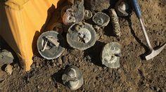 Spectacular fossils preserved in nodules found in Antarctica.