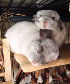 """Neelix using his sleeping brother as a """"chin"""" rest."""
