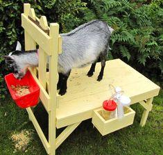 The Henry Milker: How to Build a Goat Milking Stand - The Henry Milker (Goat Bottle Holder) Cabras Boer, Goat Feeder, Goat Pen, Goat House, Goat Care, Nigerian Dwarf Goats, Raising Goats, Sustainable Farming, Sustainable Living