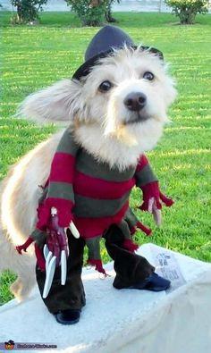 Freddy Krueger Costume <3 2012 Halloween Costume Contest  I wonder if my grandpuppy would like to wear this.