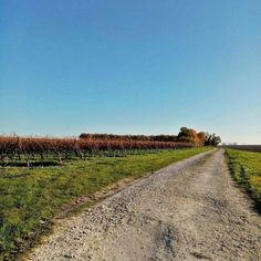 Enjoy #blueskies and sunshine on a #bikeride through the #vineyards of the #CharenteMaritime !  For more information on our great value bike hire in the area contact Chris at @BikeHireDirectFrance Charente Maritime via link in our bio :-)  #NouvelleAquitaine #France #BikeHireDirect #DispoVelo #French #cyclinginFrance #cycling #cyclisme #velo #bike #Royan #LaRochelle #Saintes #Pons Aquitaine, Vineyard, Sunshine, Country Roads, Bike, France, Cycling, Bicycle, Vine Yard