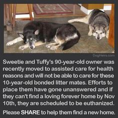 http://www.dogheirs.com/larne/posts/2202-senior-husky-mix-sisters-face-euthanasia-if-they-can-t-find-a-home-to-retire-to