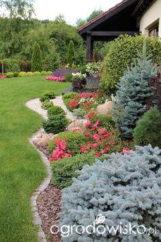 Igiełkowy ogródeczek