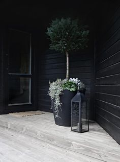 MAKING OUR ENTRANCE READY FOR FALL I Have For A Long Time Been Thinking  About Finding A Large Pot And A Wintergreen Tree For Our Entrance.