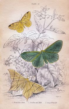 *The Graphics Fairy LLC*: Instant Art Printable - Pastel Moths - Natural History