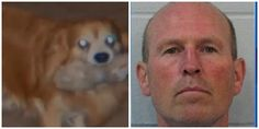 City council candidate accused of kicking 17-yr-old dog to death