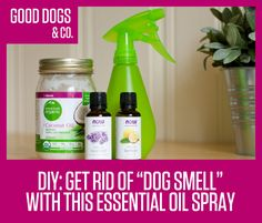 Here's the natural spray we use to get rid of dog smell between baths. Make your own! Ingredient list and DIY, on Good Dogs & Co.