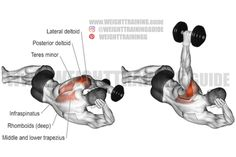 Full Body Weight Workout, Weight Lifting Workouts, Gym Workout Tips, Fitness Workouts, Rhomboid Exercises, Back Exercises, Shoulder Exercises, Delts Workout, Dumbbell Workout