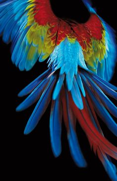 Beautiful friendly fires parrot