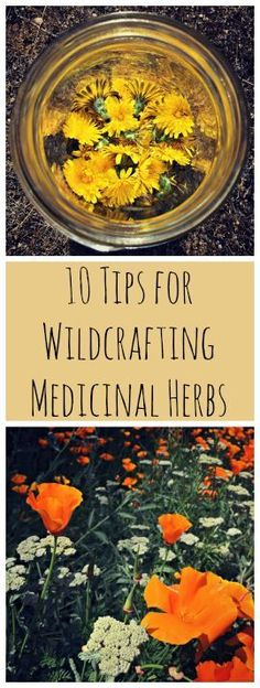 Great tips about foraging for your own herbs!