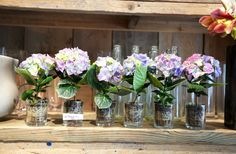 | Grace Designs: French Flower Shop