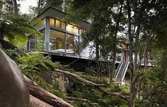 Glass Tree House Perched in the Australian Bush | Home Design Find.   There it is again, a shed roof and lots of windows.